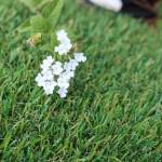 Global Synturf artificial grass