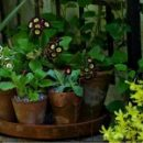 6 Great Garden Design Ideas and Inspirations