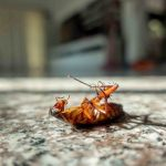 cockroach killed by effective pest control