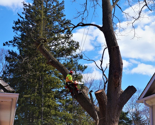 Professional Tree Removal Contractors