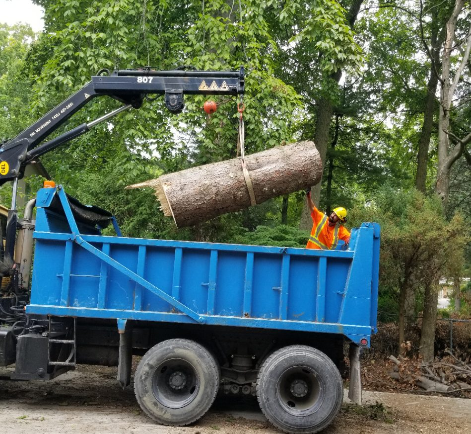 Removal of Stump and Lumber