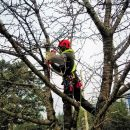 5 Important Tips to Make the Tree Removal Process Easy and Smooth