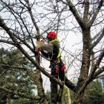 best tree removal company