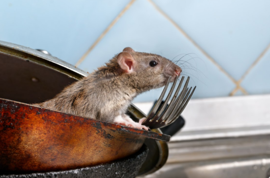 Mouse on Old Cookware