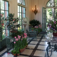 5 Beautiful Indoor Plants that Make a Nice Addition to Your Home Décor