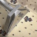 Easy Carpet Cleaning Tips for a Fresh Carpet Welcoming You and Your Family and Guests