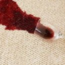 Steam or Dry Cleaning? Which Method is Better for Your Carpets